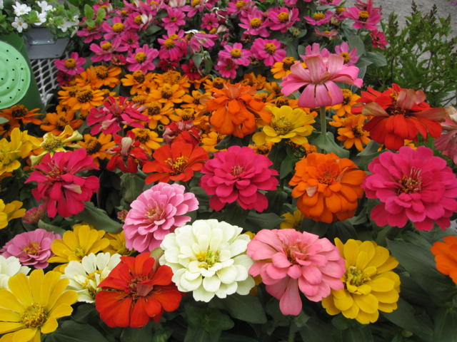 Flowers of all kinds