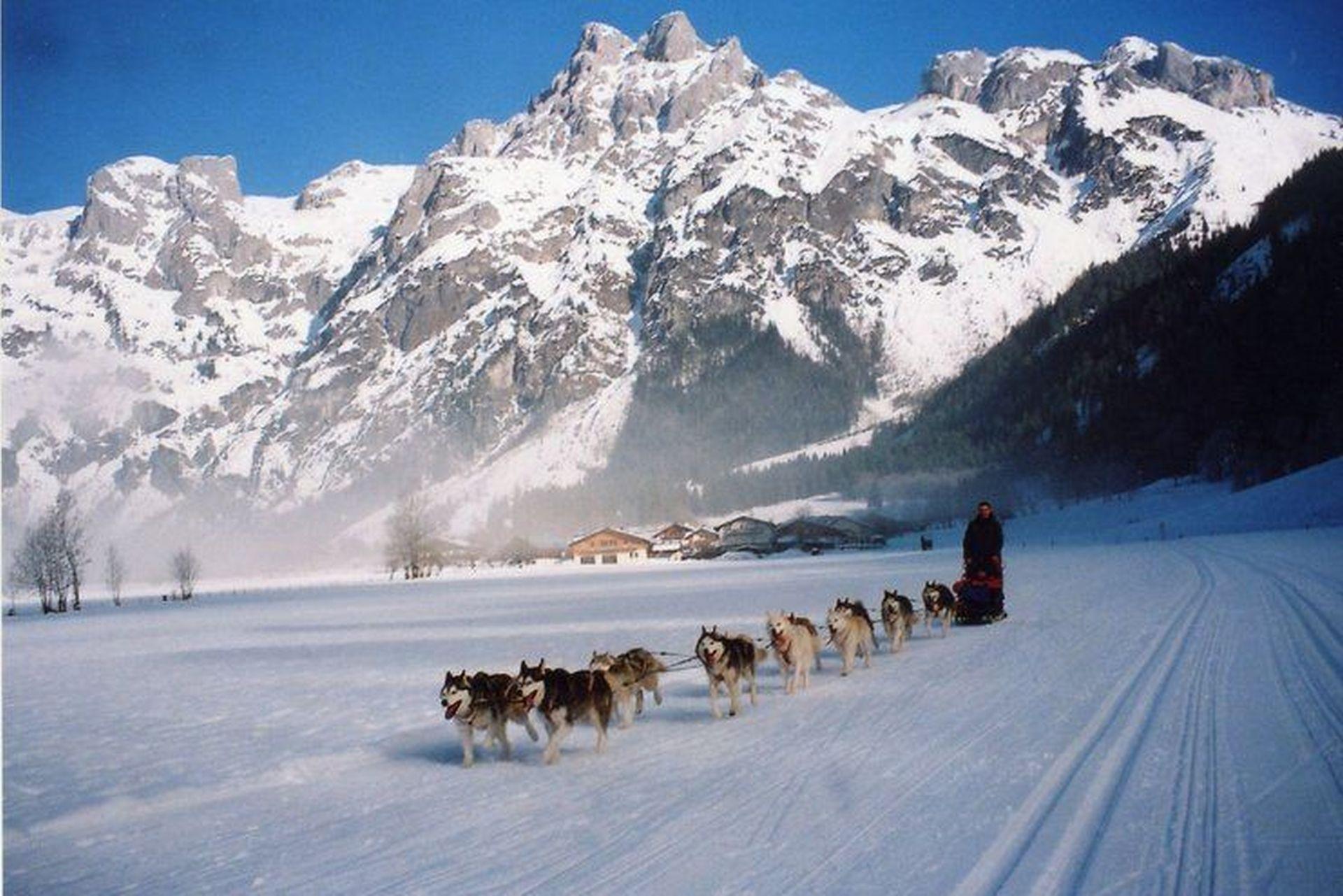 Fast jährlich findet das Schlittenhunderennen in Werfenweng statt