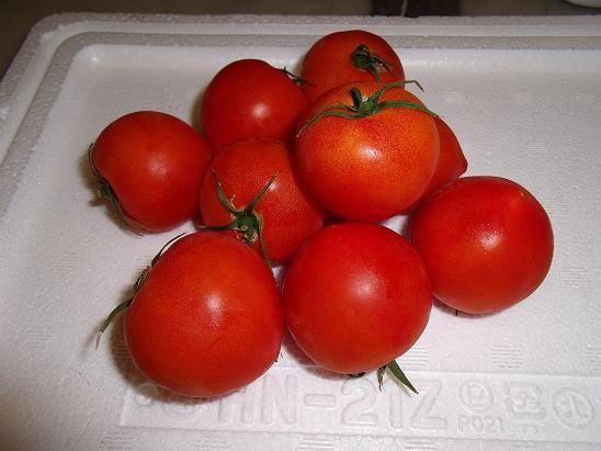 福井県産越しのルビートマト