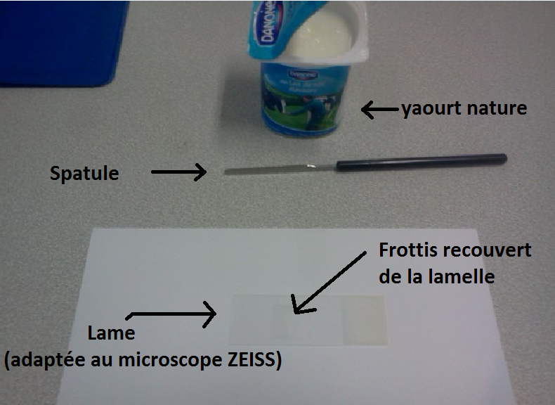 péremption yaourt