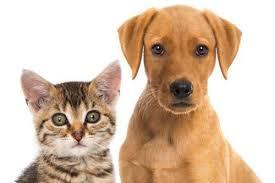 produits hygiène pour chien et chat