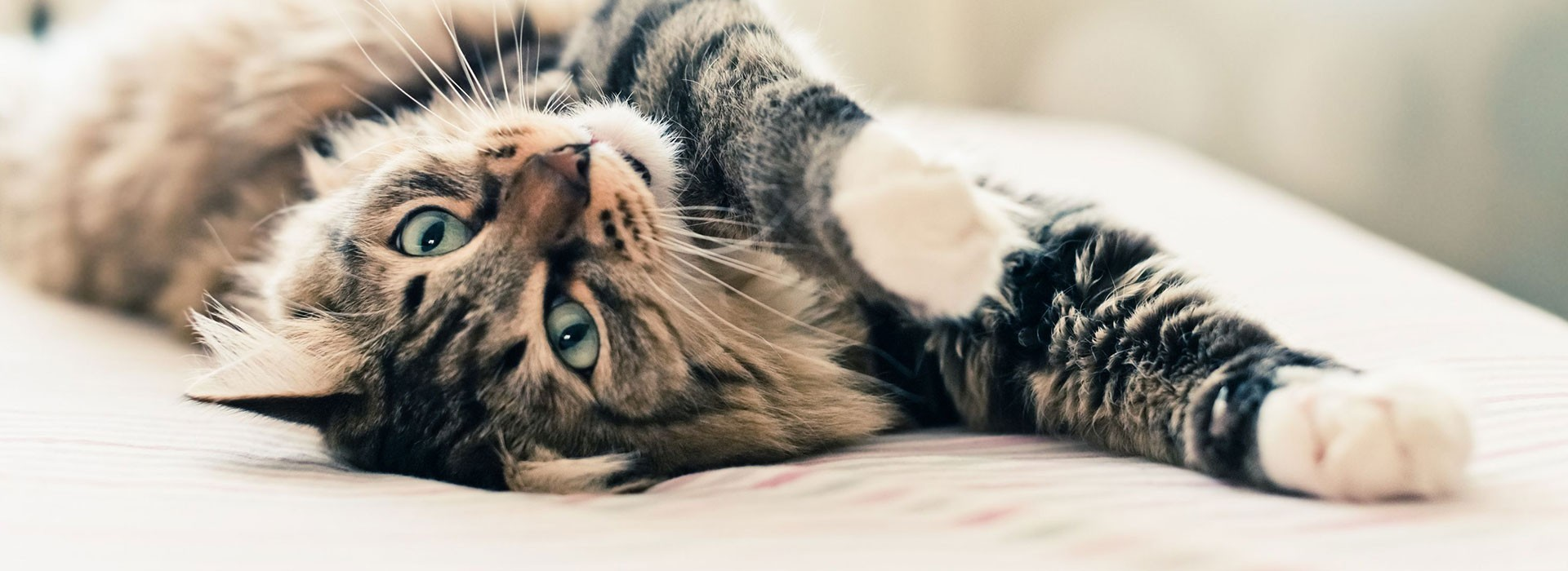 Für katzen schlafmittel Name von