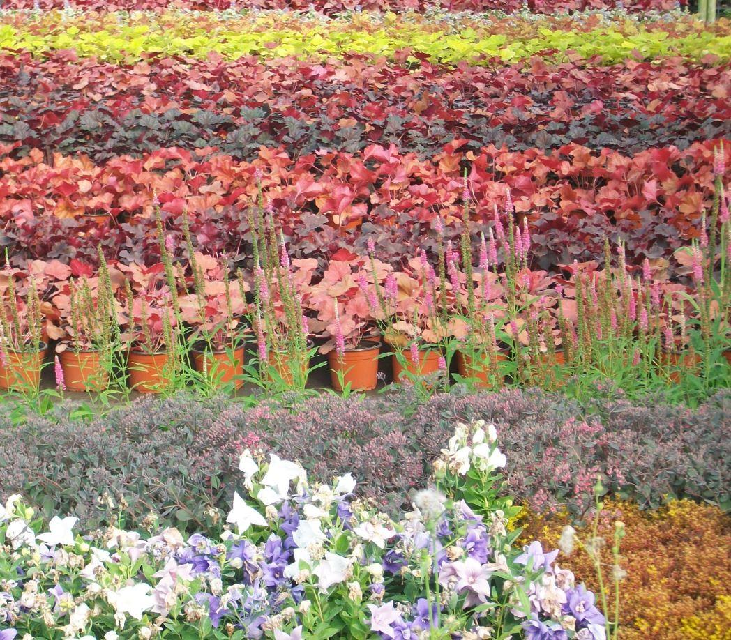Vente en ligne plantes vivaces gramin es decoration jardin for Vente en ligne plantes de jardin