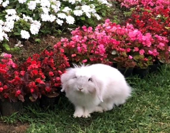 カメラ目線で笑ってる島ウサギ