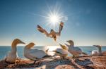 Eschmarer Naturfototreff - 2020 Die Küste - Trennlinie und Lebensraum