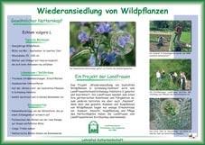 Infotafel Lehrpfad Bothkamp: Wiederansiedlung von Wildpflanzen