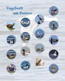 Infotafel Stadt Preetz: Vogelwelt am Postsee