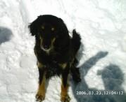 Freya 10.9.1999 - August 2010