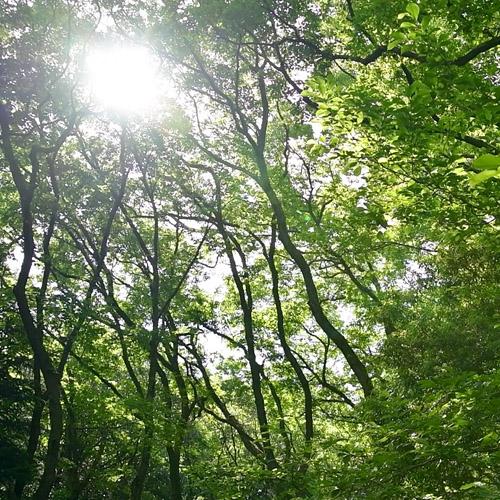 生田緑地画像