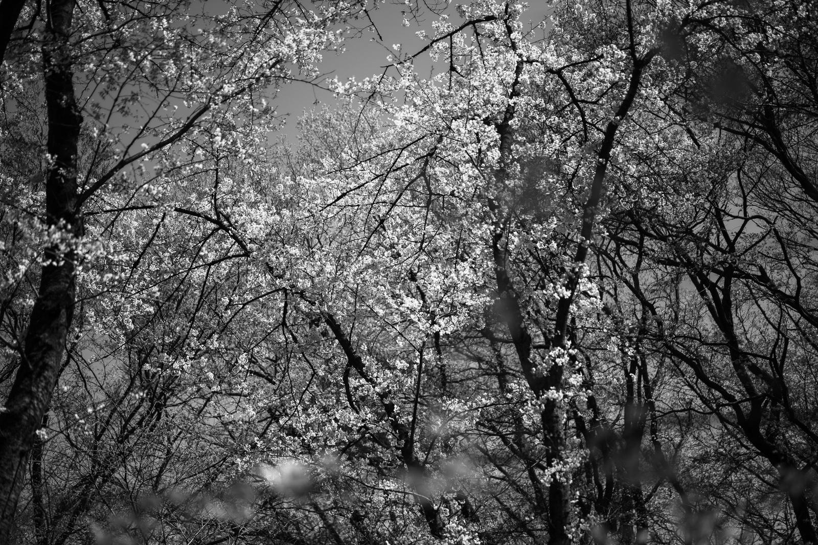 川崎市東高根森林公園 SONY α7RⅢ fe55mm f1.8