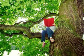Mensch sitzt in altem Baum auf Ast und liest.