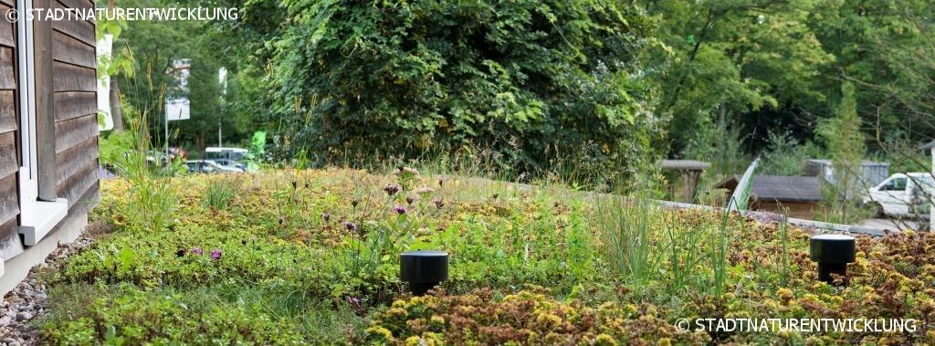 Blütenmeer auf artenreichem Gründach
