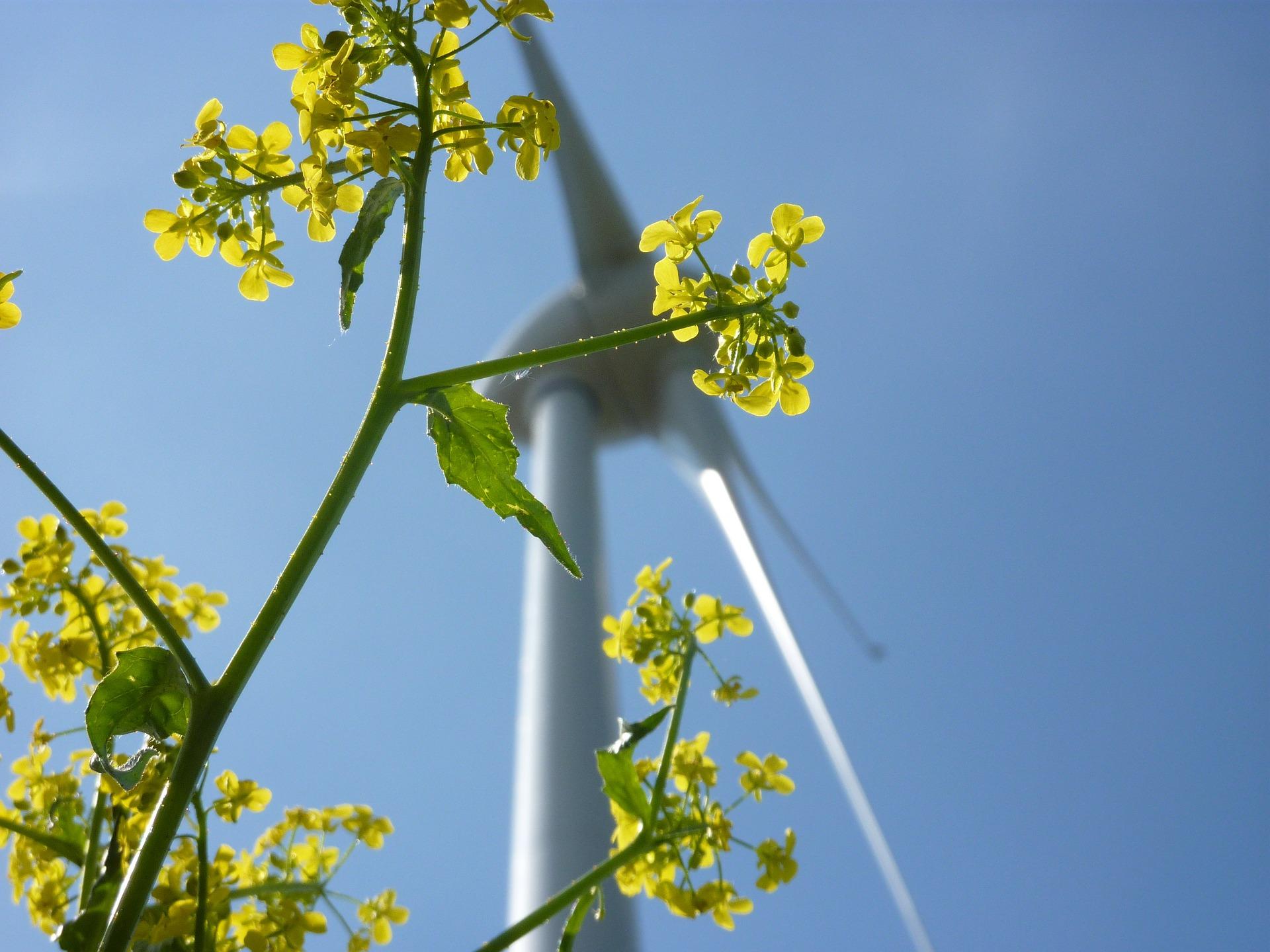 9. Alle Stromanbieter haben Ökostrom im Programm. Der ist entgegen des Mythos nicht teurer als konventioneller Strom. Regenerative Energien machten in Deutschland 2017 einen Anteil von rund 33% aus und schaffen mehr Arbeitsplätze als sie nehmen.