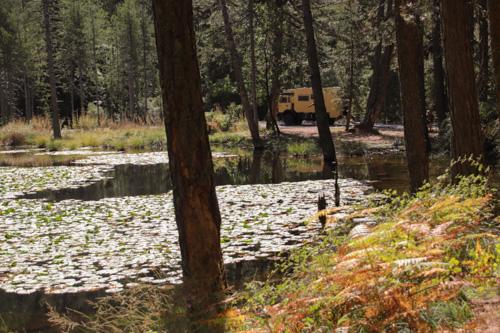 Teich mit Wasserlilien - ich würde sagen Seerosen