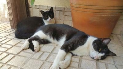 Lola & Silvestre