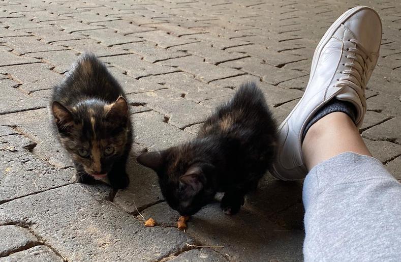 Und die nächsten Kitten suchen eine Pflegestelle