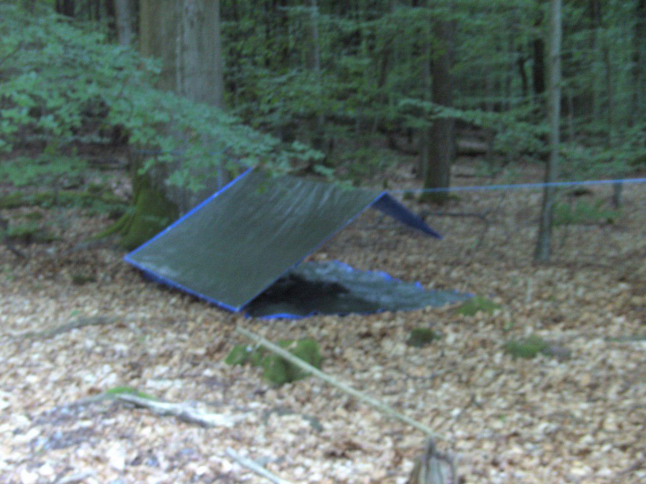 Shelter im Mischwald. Raupen als Mitbewohner inklusive.