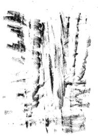 Empreinte du tronc de Chamaecyparis. © Sandrine Tellier