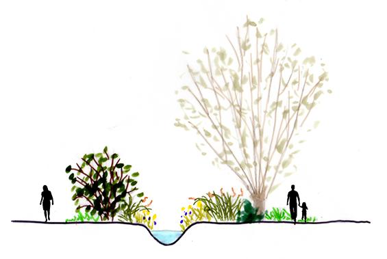 Avant-projet - Ambiance végétale sur les berges du ru