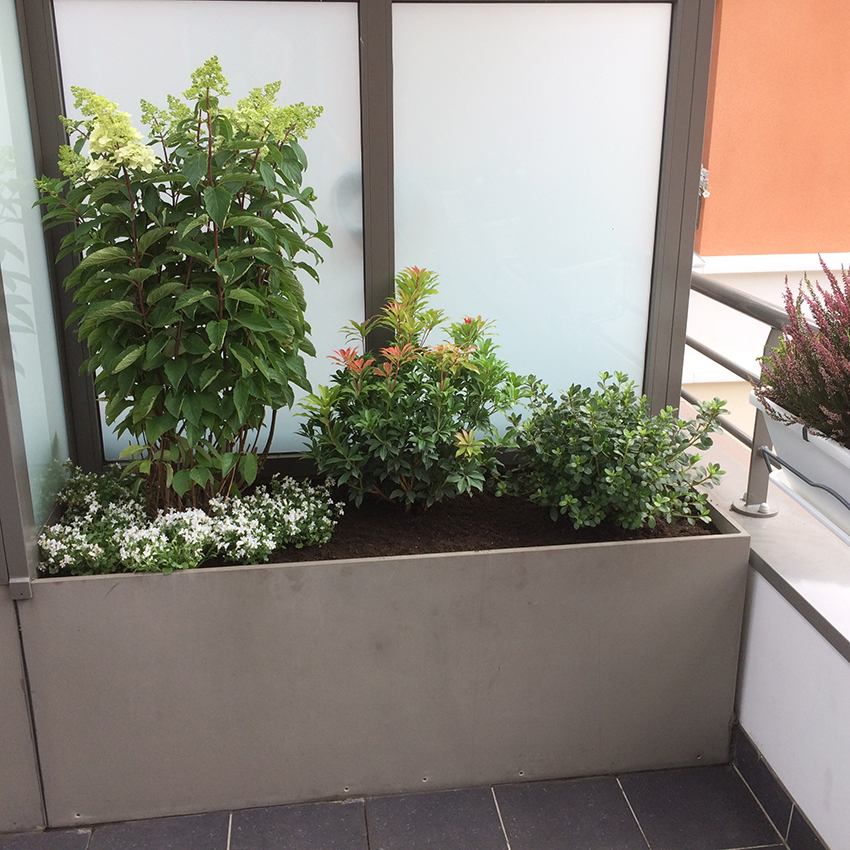 Grande jardinière : Hydrangea Paniculata Fraise Melba, Azalea Japonica Dorothy Heiden, Pieris Japonica Mountain Fire