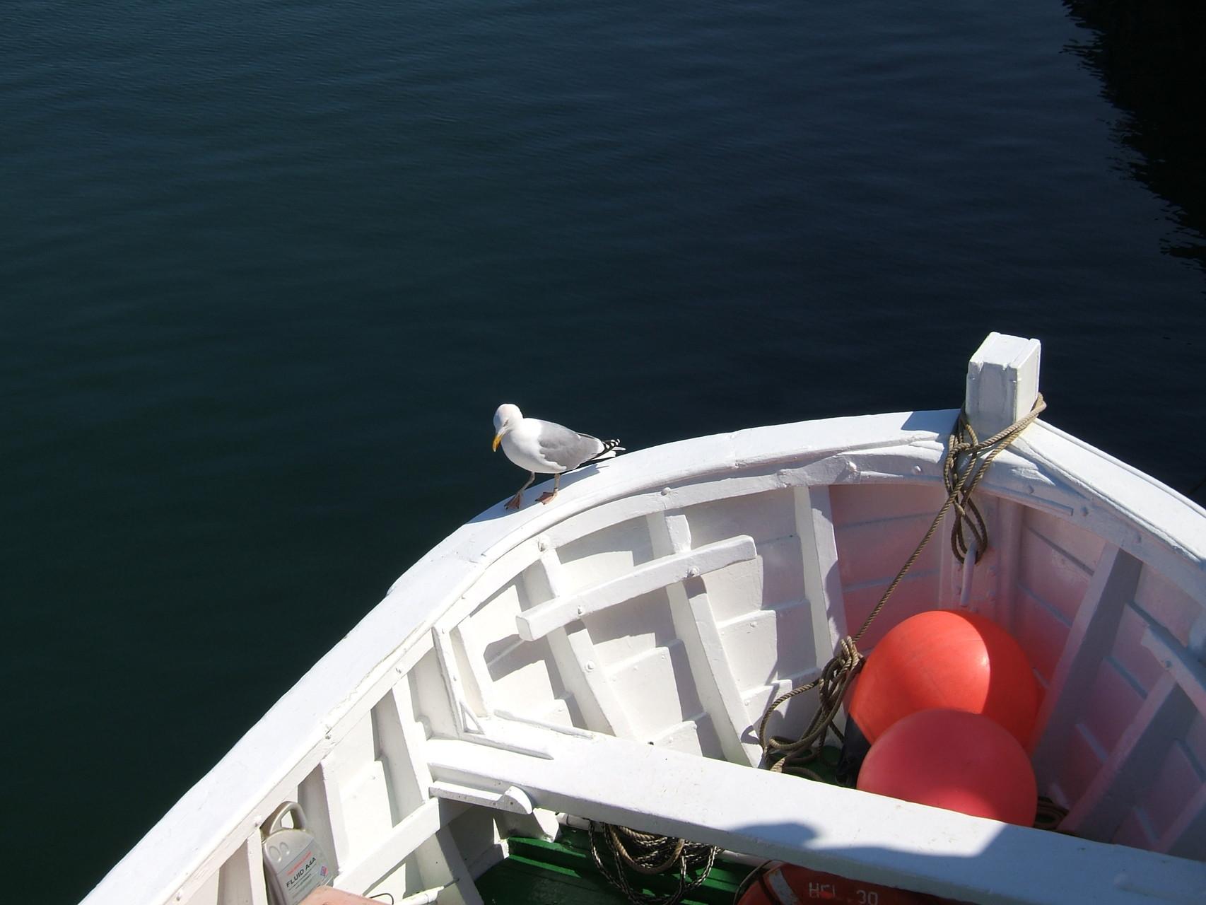Möwe auf dem Börteboot im Hafen von Helgoland