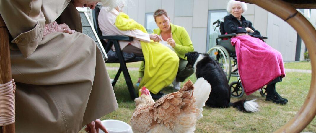 Hühner bringen Abwechslung und Freude in den Alltag