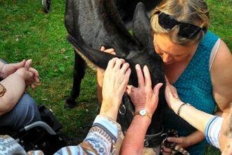 Der Kontakt zu Tieren fördert die Gesundheit