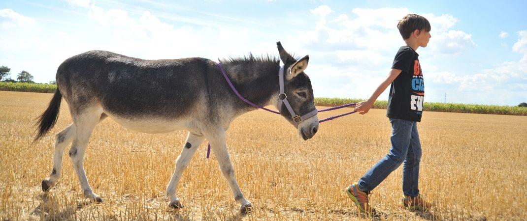 Eine Eselwanderung ist ein tolles Erlebnis für Groß und Klein