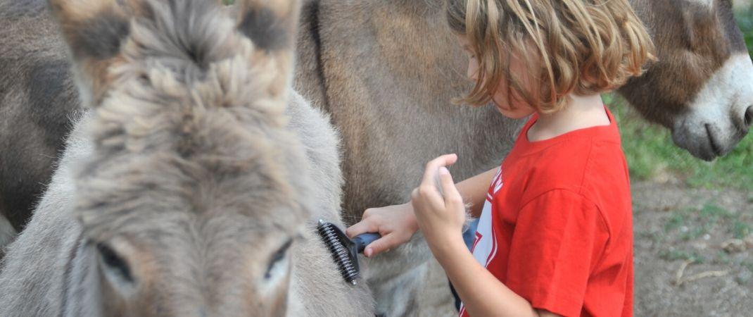 Der Eselführerschein ist für kleinere Kinder eine tolle Möglichkeit, mit Eseln in Kontakt zu kommen