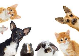 Energiearbeit für Haustiere