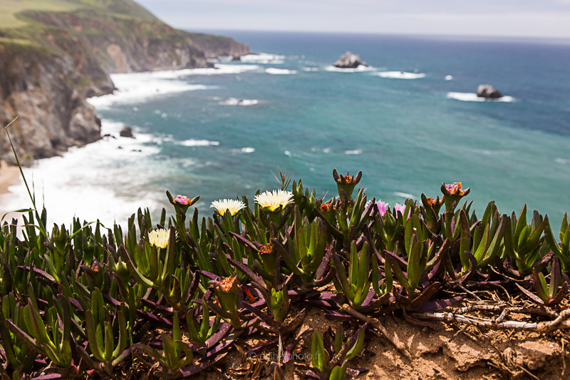 californie, états unis, united states, amérique du nord,pacifique, côte pacifique, california,road trip california, byzegut, rtl2, rachel jabot ferreiro, erjihef photo, big sur