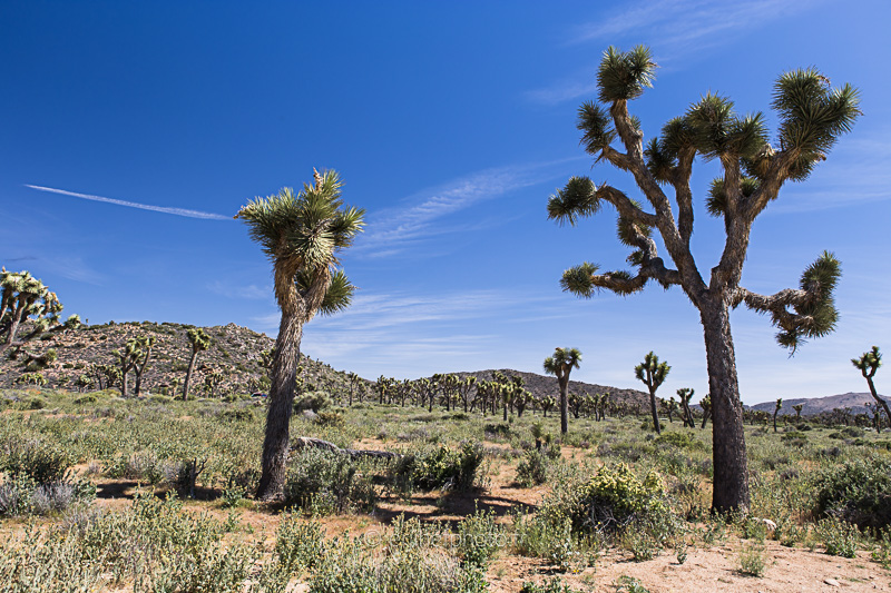 desert mojave, désert, yucca valley, joshua tree, road trip, road trip california, hit z road by zegut, rtl2, californie, etats unis, usa, rachel jabot ferreiro, erjihef photo
