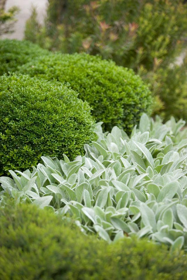Flores y plantas-paisajismo santander