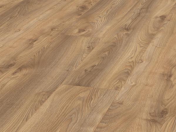 Cupress Oak