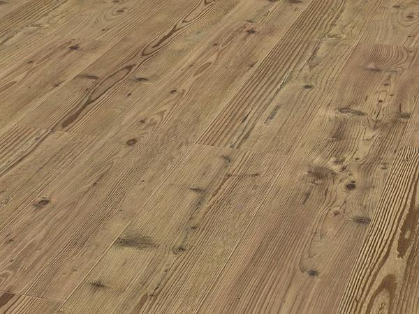 Gorongosa Oak