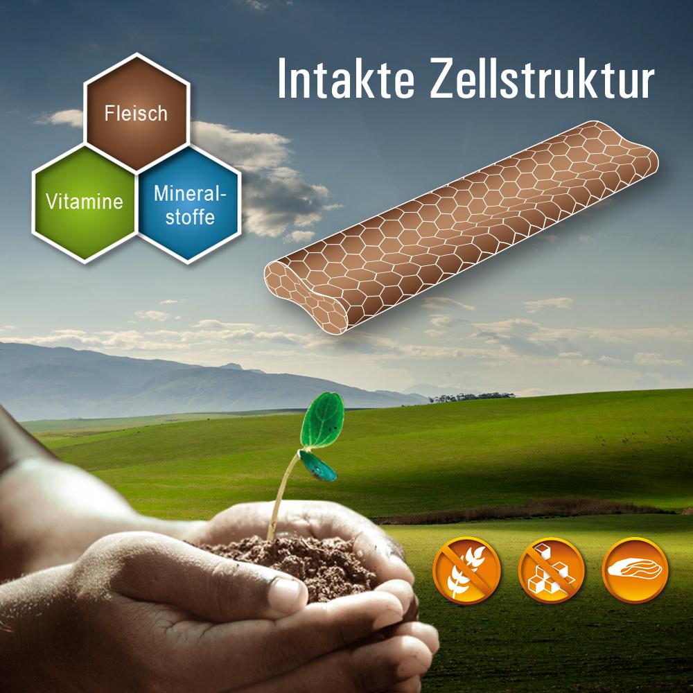 KAP-Snacks - kaltgepresst, Zellstruktur der Inhaltsstoffe bleibt