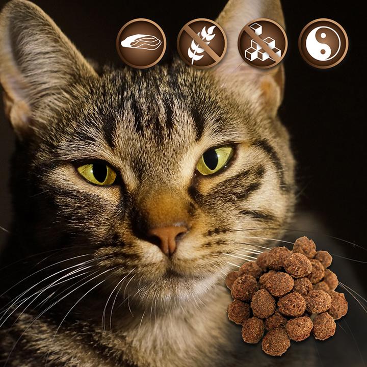 Katzensnacks - ohne Zucker und getreidefrei