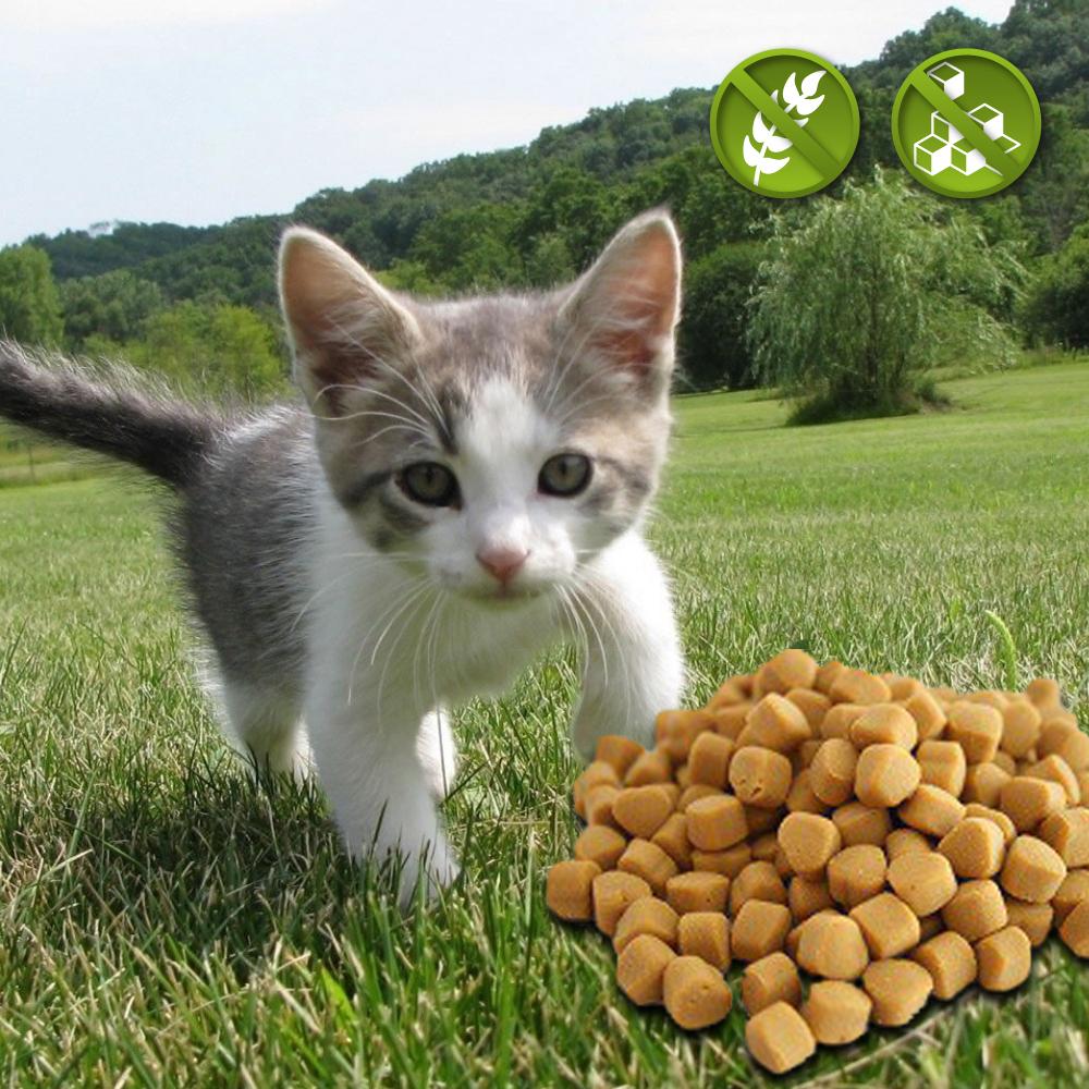 Katzensnacks für Jungkatzen
