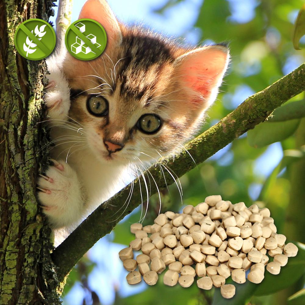 Katzensnacks - getreidefrei
