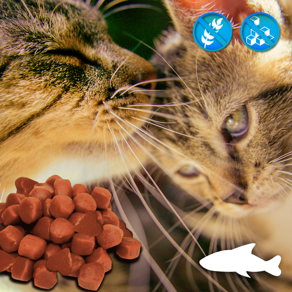 Soft Snacks - Katzensnacks - Herzchen Lachs ohne Zucker