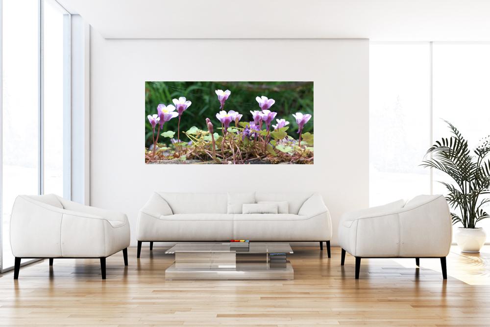 "Leinwandbild ""Violet Flowers"""