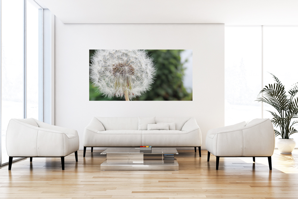 "Leinwandbild ""Light Flower Pusteblume"""