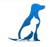 Найда Фонд помощи бездомным животным во Владивостоке