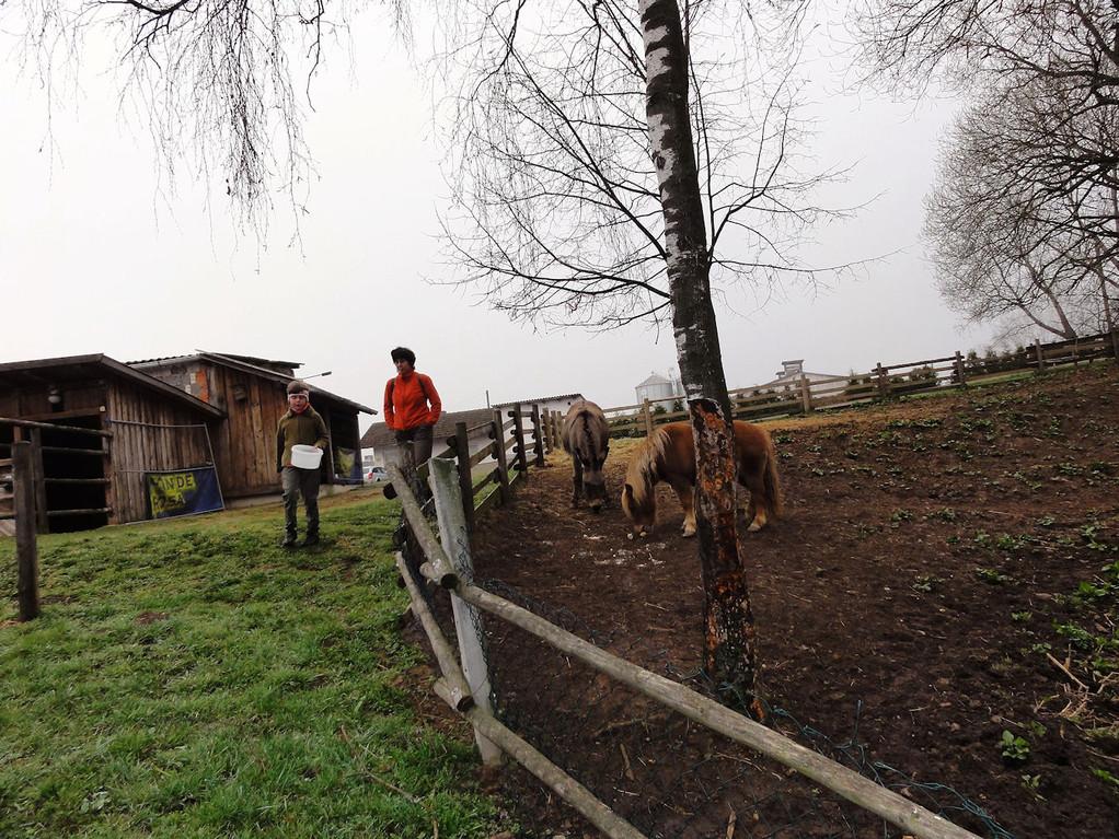 Kathi durfte die Ponnys und Ziegen füttern