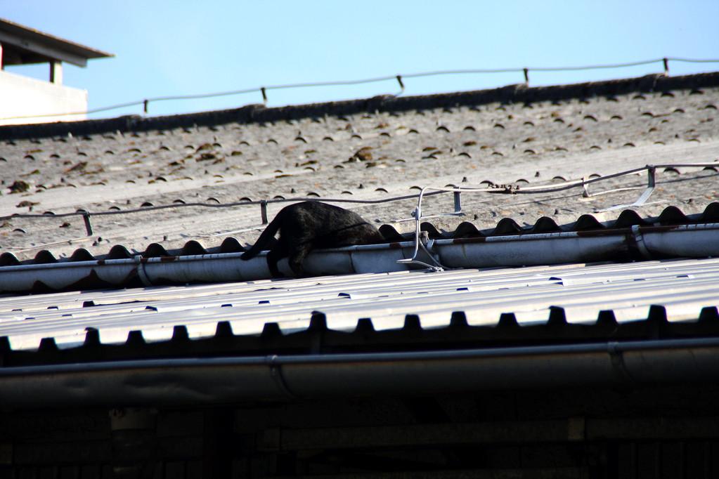 die Katze auf dem heißen Blechdach...