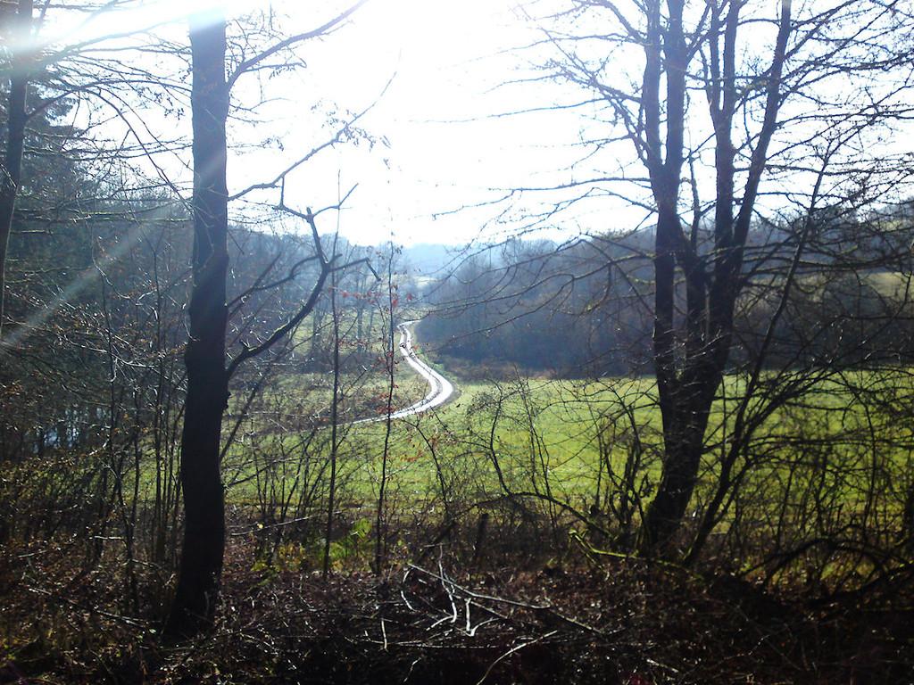 Aussicht vom Pferderücken 2 / Richtung Bischofsrod