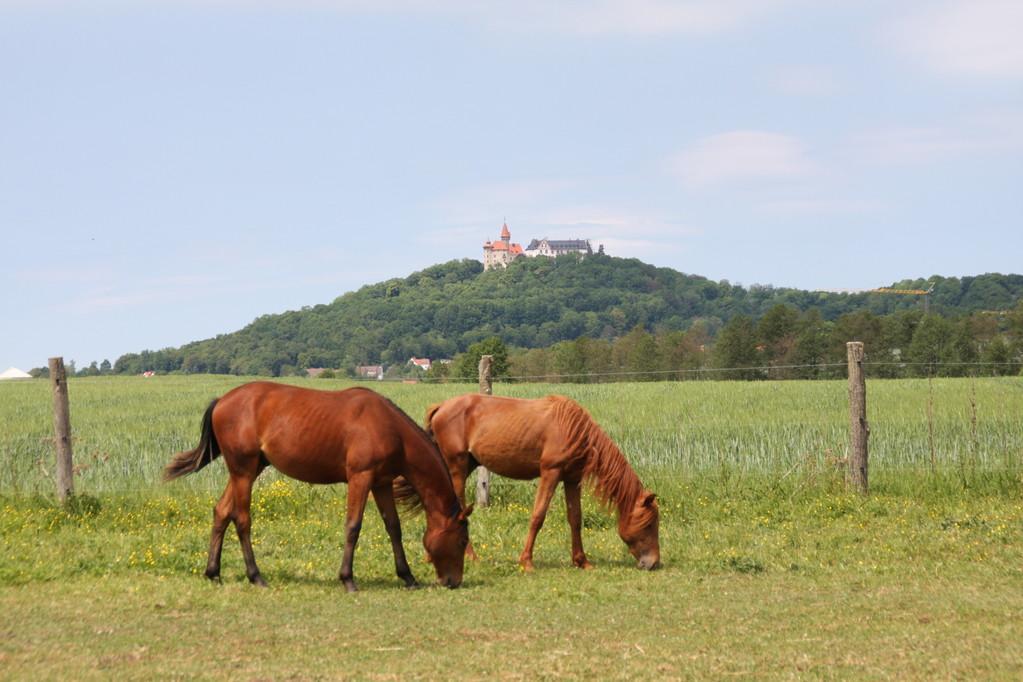 Einöd - Blick zur Heldburg
