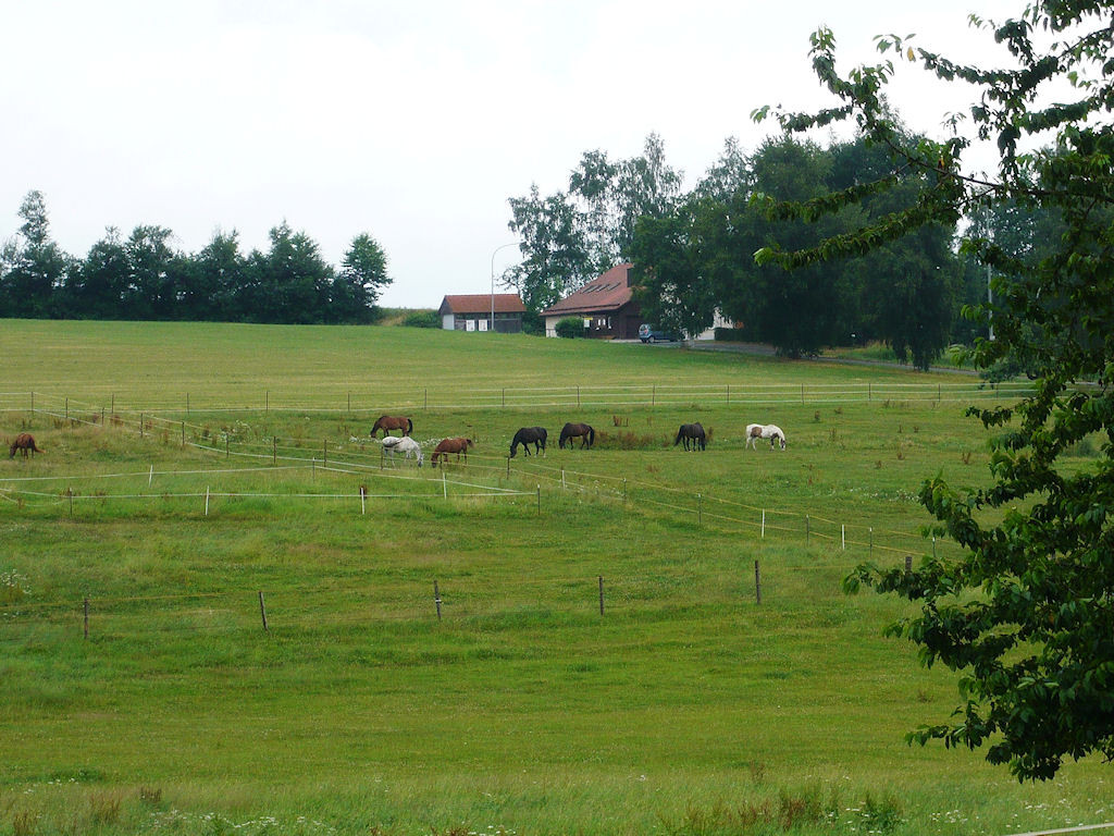 Die Herde auf den Koppeln hinter dem Haus