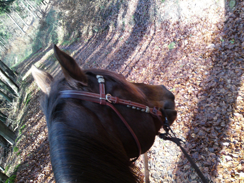 Pferd und Reiter im Einklang