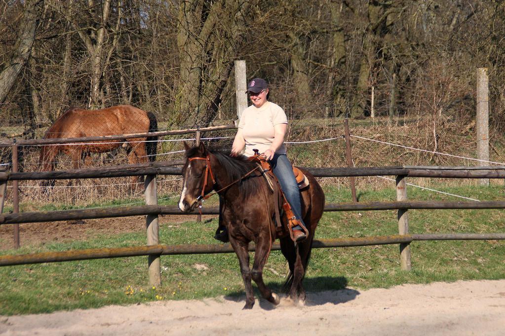 Buster ist der Jüngste unter den Pferden im Kurs